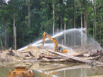 Image result for forestry products   in french guiana